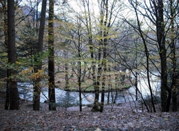 River in Woods