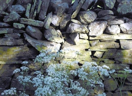 Stone Wall and Flowers