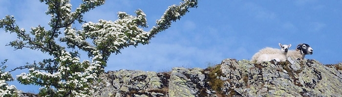 Sheep Ridge